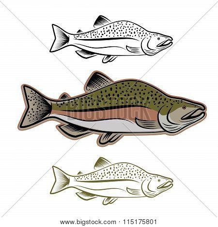 Salmon Fish Illustration Set