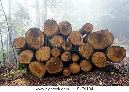 Logs In The Forest
