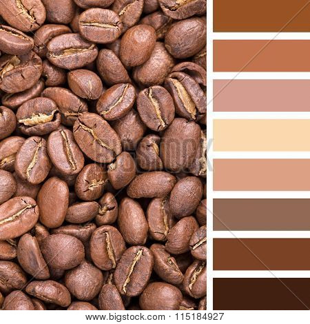 A background of New England roast coffee beans. In a colour palette with complimentary colour swatches.