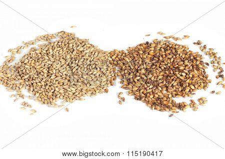 malt grains on white