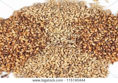malt grains closeup