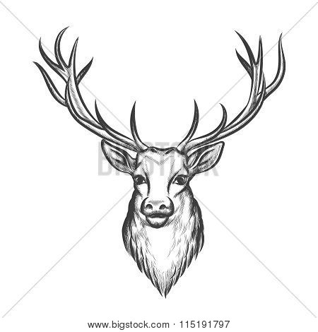 Hand drawn deer head