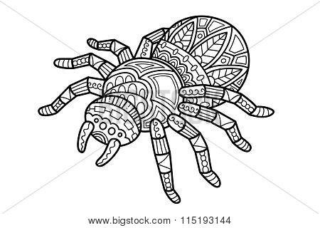 Cute spider.