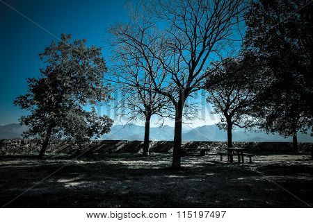 Winter lanscape with blue sky and dark trees.