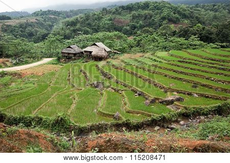 Traditional farmhous with terraced rice field
