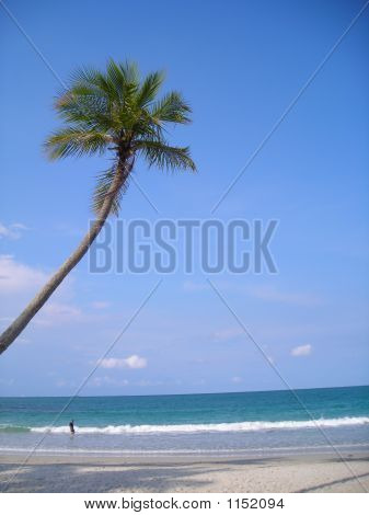 Coconut Tree On Beach @ Bintan, Indonesia