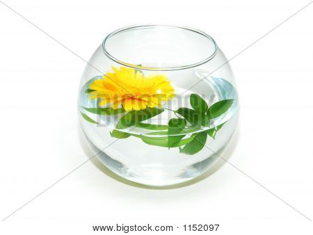 Fish Tank And Yellow Flower Isolated On White