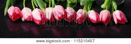 Horizontal panorama with pink  tulips on black background.
