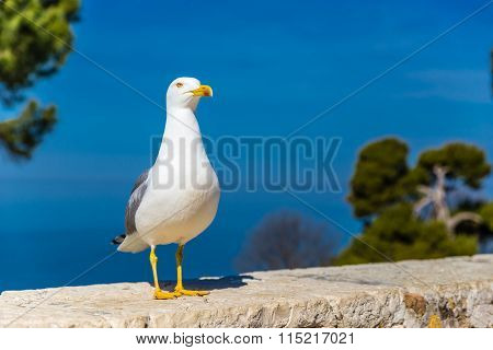 Standing Seagull With Blue Sky In The Background