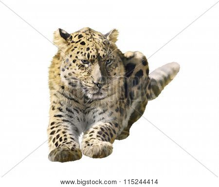 Digital Painting of Leopard Portrait isolated on white background