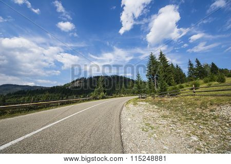 Asphalt Road In Summer Forest