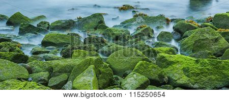 stone background with moss of the beach.