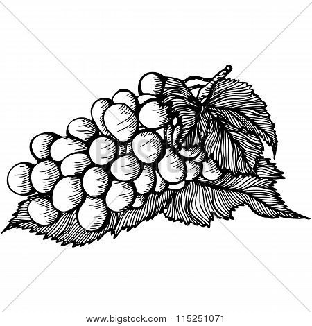 bunch of grapes monochrome drawing