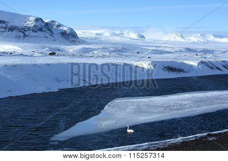 Swan At A Frozen Lake