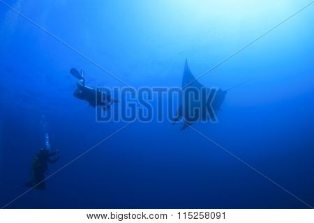 Manta Ray and scuba divers diving