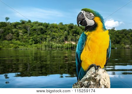 Blue and Yellow Macaw on the nature