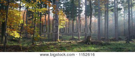 Herbst in der Gesamtstruktur