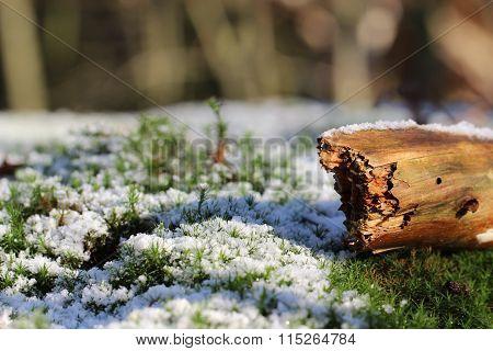 Wonderfull winter backgrounds