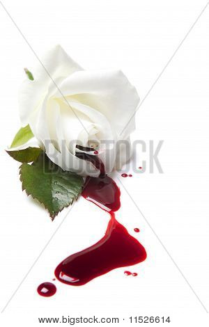 Bleeding White Rose