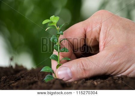 Man's Hand Planting Small Tree On Ground