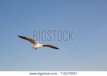 Seagulls, Minimalism