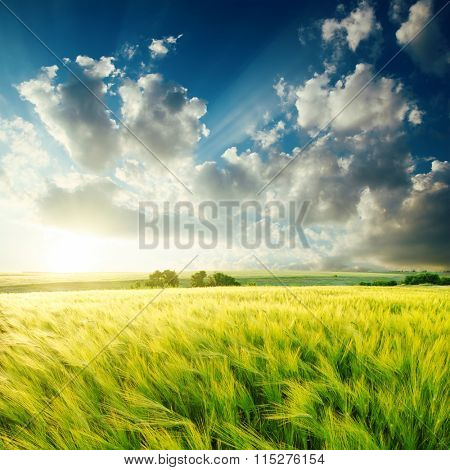 green agriculture field and sunset over it