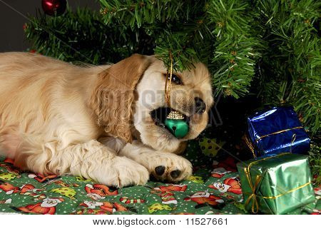 Bad Christmas Puppy