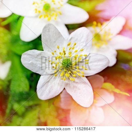 Spring Landscape. Flowers Snowdrops