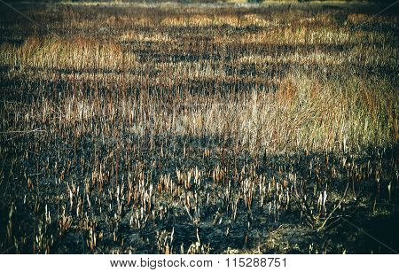 Burnt Fields And Dry Grass
