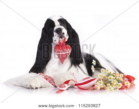 dog holding a toy heart in the mouth