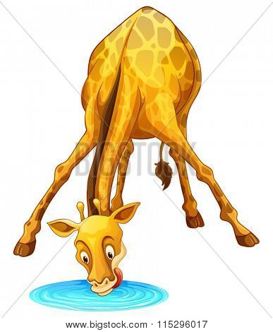 Giraffe drinking water from the puddle illustration