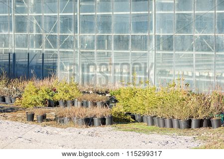 Plants Outside A Greenhouse