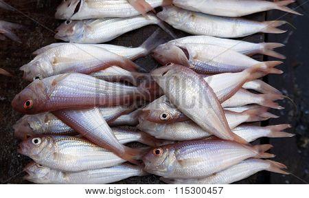 Stacked Fish At Stone Town Fish Market