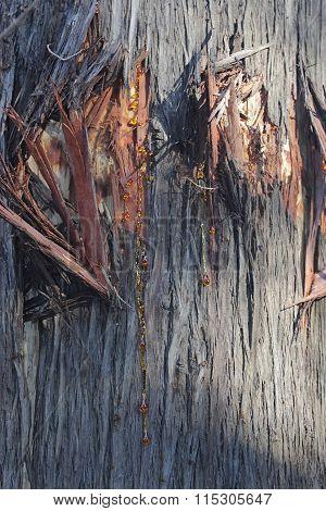 Natural Coniferous Resin