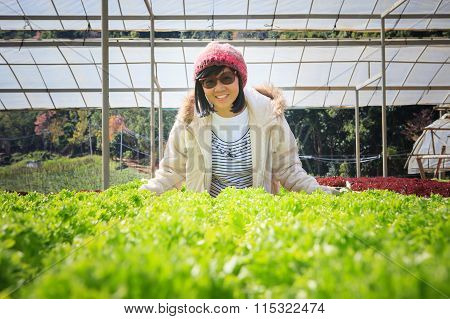 Healthy Care Woman In Hydroponic Vegetable Green House Plantation