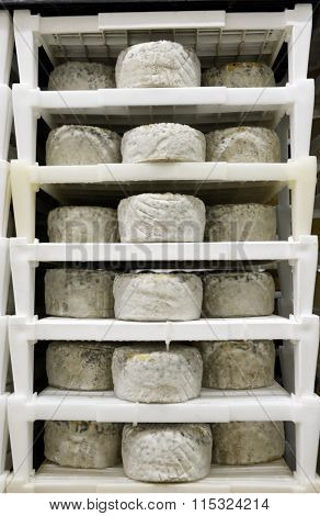Cheese Maturing In A Dairy