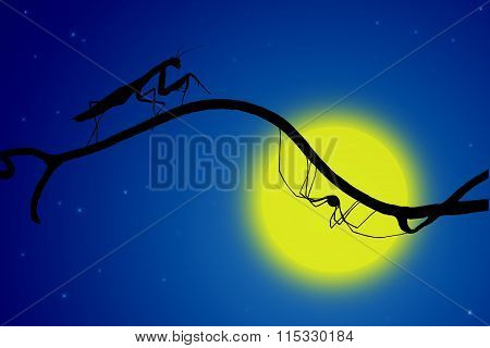 The Silhouettes Of A Graceful Praying Mantis And The Spider On  Fine Twig On The Backdrop Of The Moo