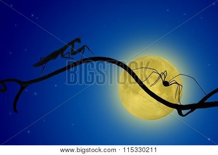 The Silhouettes Of The Praying Mantis And The Spider On Slender Twig On The Backdrop Of The Moon. Sp