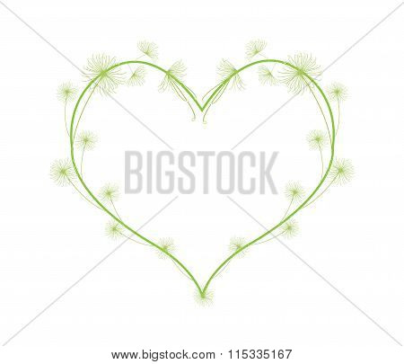 Fresh Cyperaceae Plants in Beautiful Heart Shape