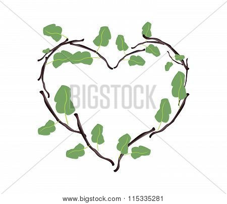 Green Leaves And Twigs In A Beautiful Heart Shape