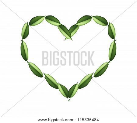 Beautiful Green Leaves In A Beautiful Heart
