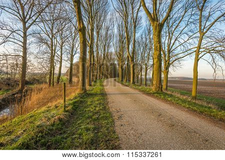 Bare Trees On Either Side Of A Country Road