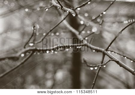 The beautiful autumn tree branch with rain drops,  macro background