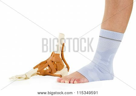 Human Foot In Ankle Brace And Skeletal Model