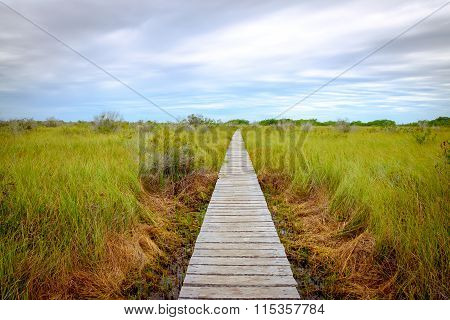 Landscape View Of Wooden Boardwalk In Swamp