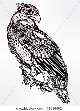 Detailed hand drawn bird of prey.