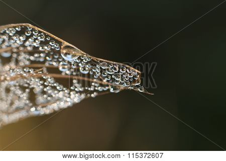 water drops on stick