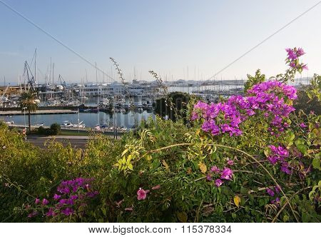Bougainvillea Flowers And Harbor
