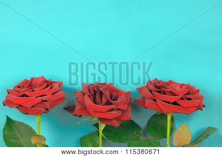 Three Red Roses On A Light Blue  Background
