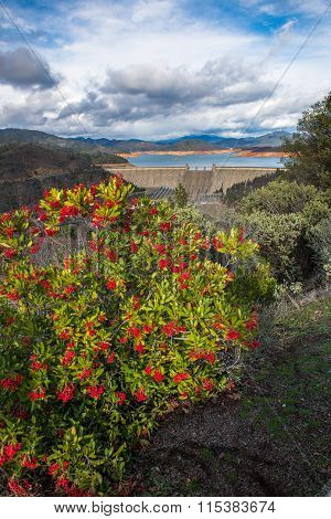Shasta Dam, California